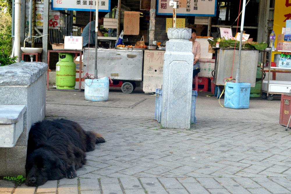 Sleeping doge.jpg