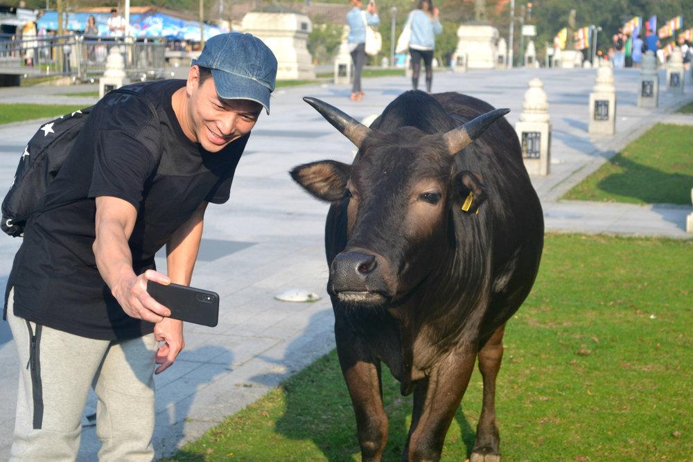 Cow selfie.jpg