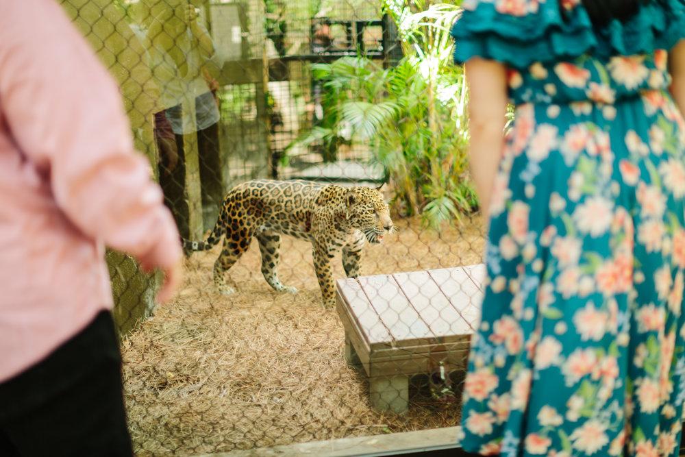 2018.05.01 Ashleigh and Nathan Brevard Zoo Engagement Session-138.jpg