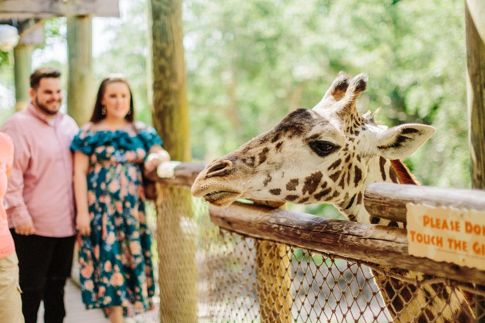 2018.05.01 Ashleigh and Nathan Brevard Zoo Engagement Session-160.jpg