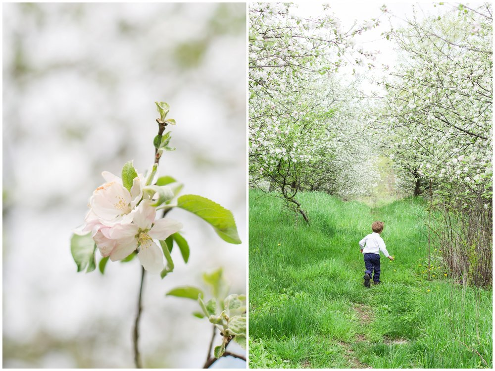 Seacoast New Hampshire Wedding Photographer | Apple Blossoms | Epping, NH
