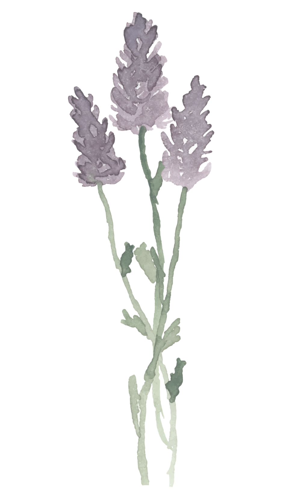 Lavender-Only.png