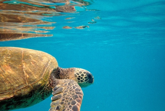 Swimming with the sea turtles and a GoPro underwater camera.