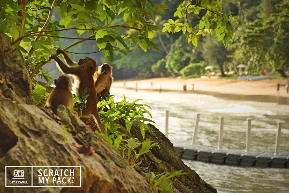 Monkeys playing in Au Nang, Thailand