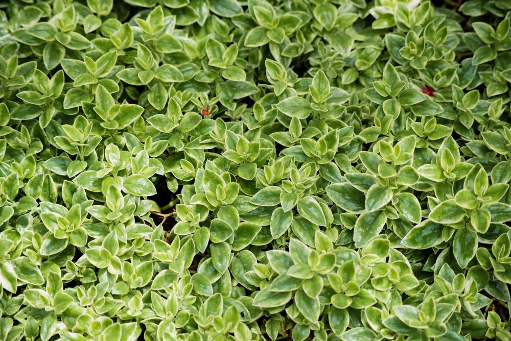 brookgreen garden myrtle beach-28.jpg