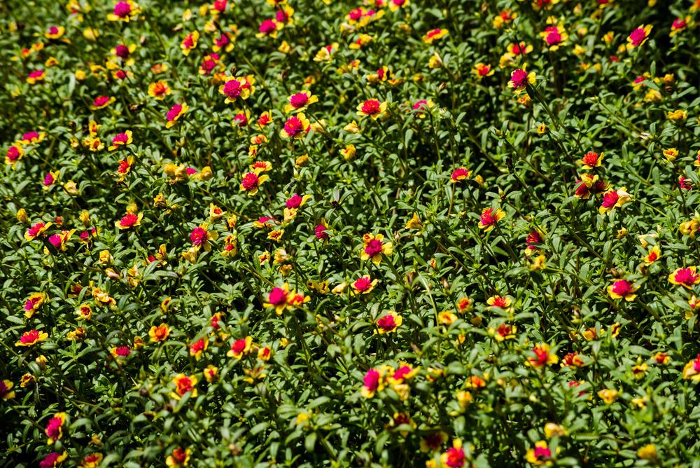 brookgreen garden myrtle beach-37.jpg