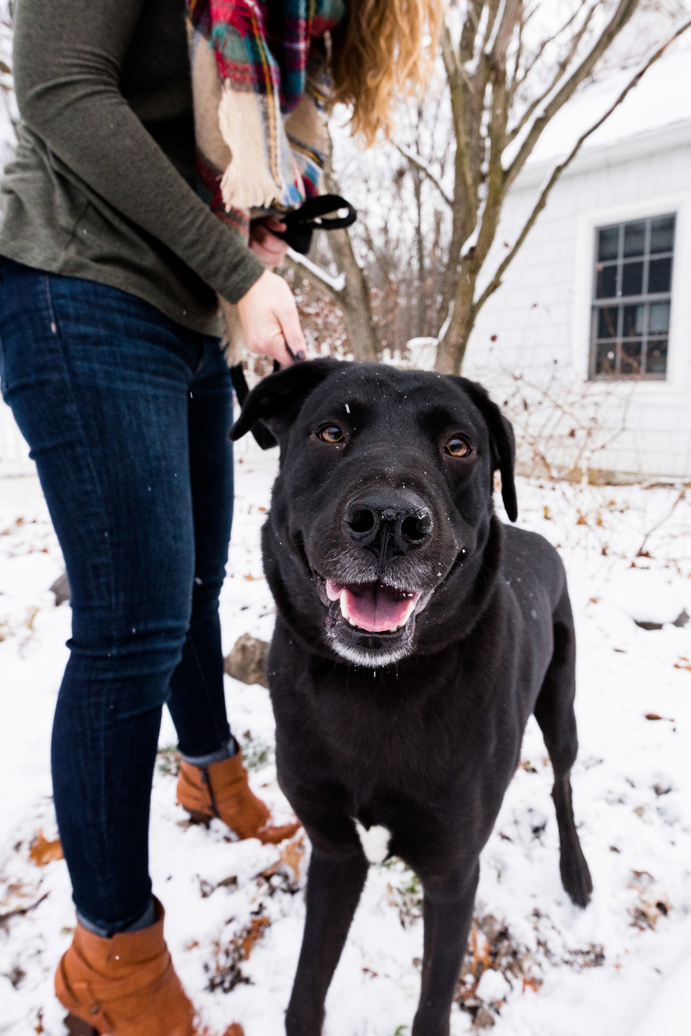 ohio pet photographer