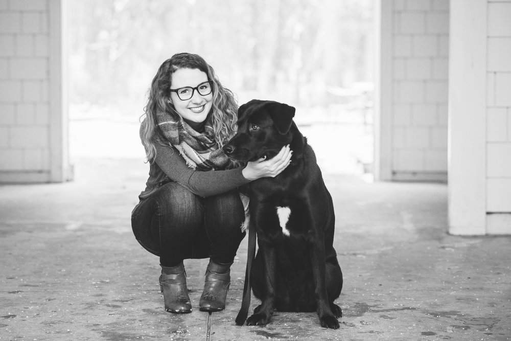 black lab pet photography