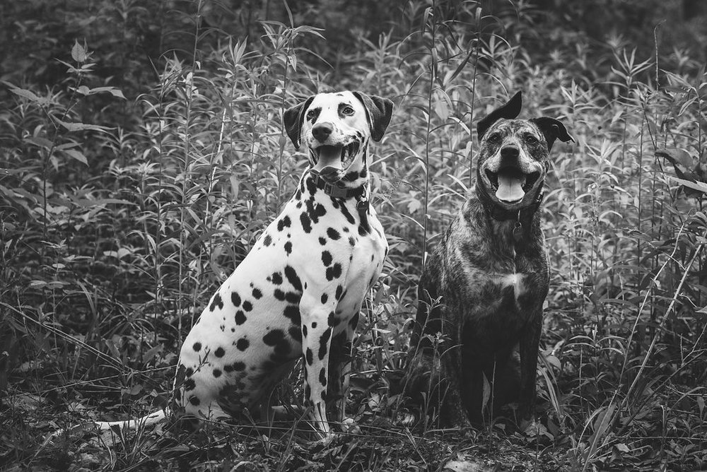 toledo dog photography
