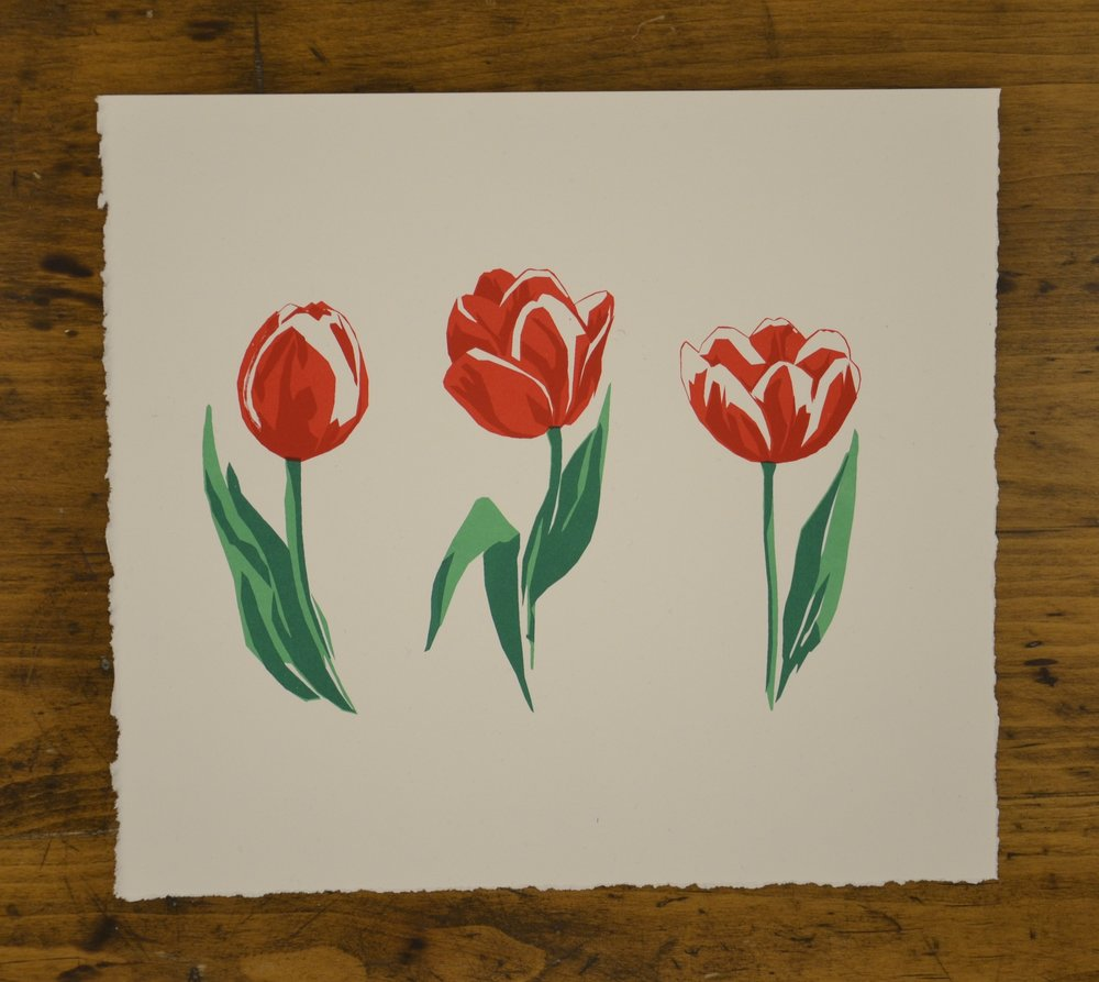Canada 150 Tulip