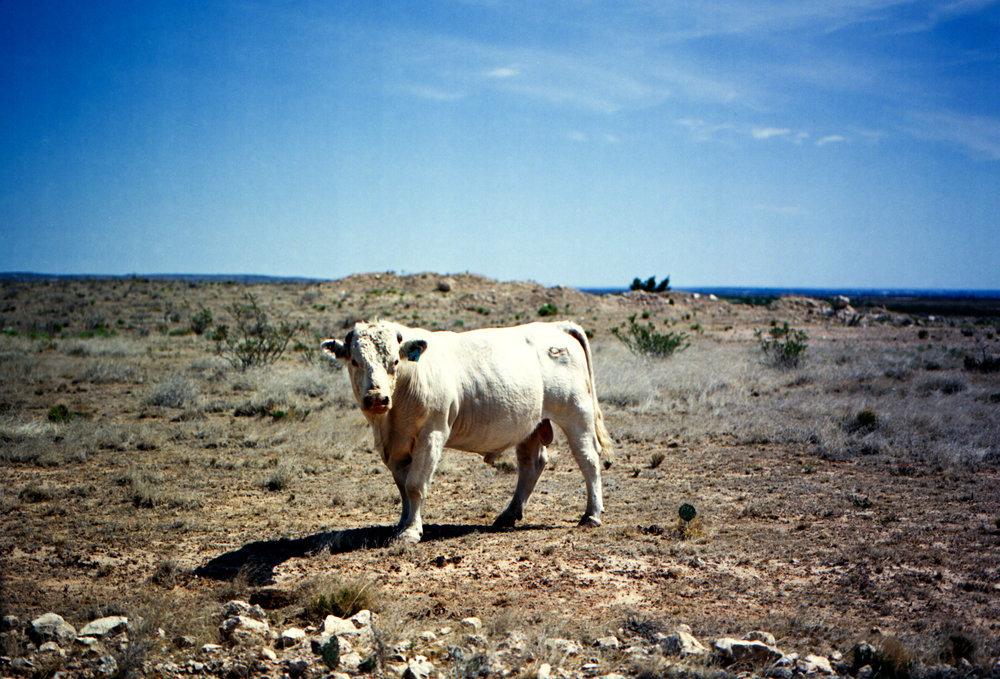 Mamiya 645AF | Kodak 645AF | Bullheaded