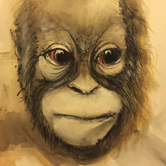 Painted this little dude. He's a bit cute. #orangutan #watercolour #pencil #painting #animal #coreywyerart #nature #wildlife #monkey #ape #chimp #projectorangutan