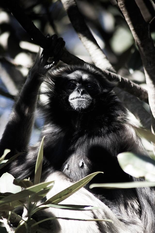 Rad looking Gibbon