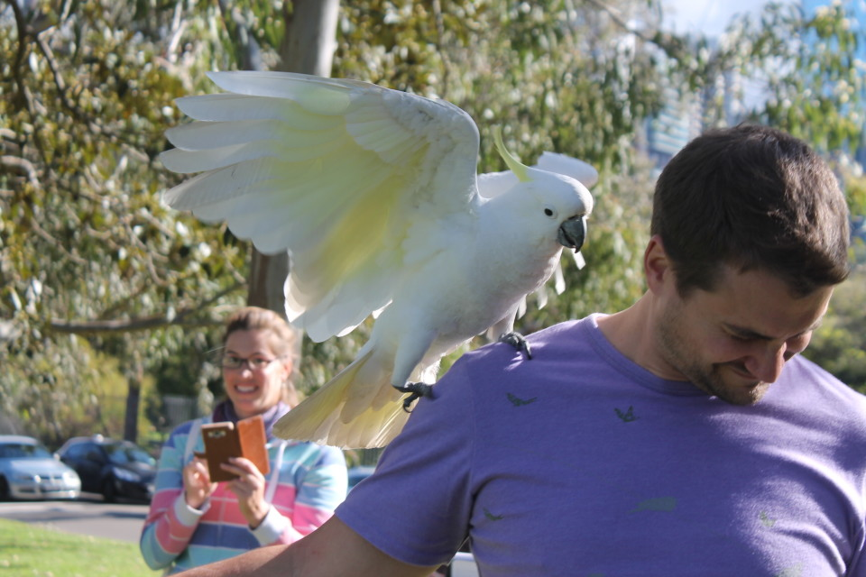 Getting a visit from a cockatoo in the Sydney Botanical Gardens during a Environmental Humanities Capstone fieldtrip.