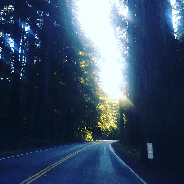 We're BAAAAACK! Driving through the majestic Redwood Forest between our shows in Crescent City, CA and Medford, OR this weekend! #songanddance #tap #tappers