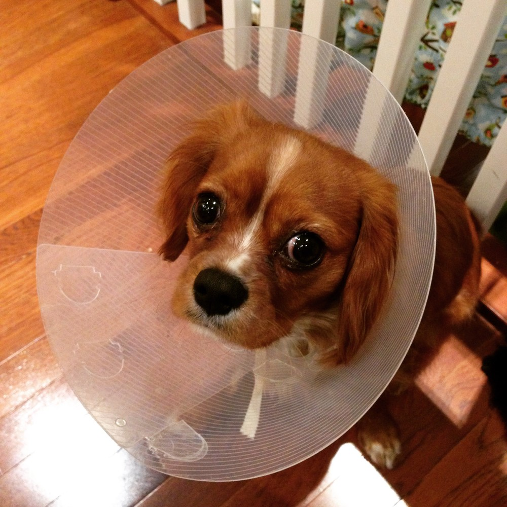 Darwin and his cone. As you can tell, he's thrilled