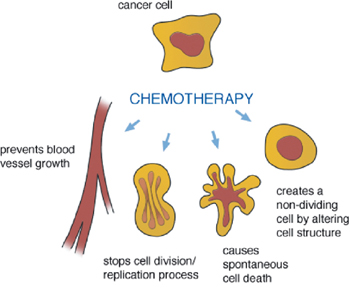 A handy guide to the basics of chemo from www.lymphoma.ca