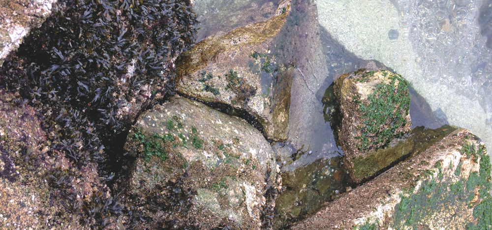 10  seaweed_010JPG.JPG