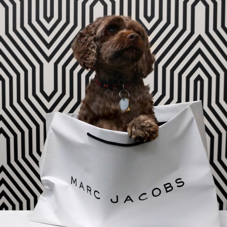 Had to repost this for  #nationalpuppyday  - Cooper our office dog getting in to some  #marcjacobs  mischief.  #packaging   #designpackaging