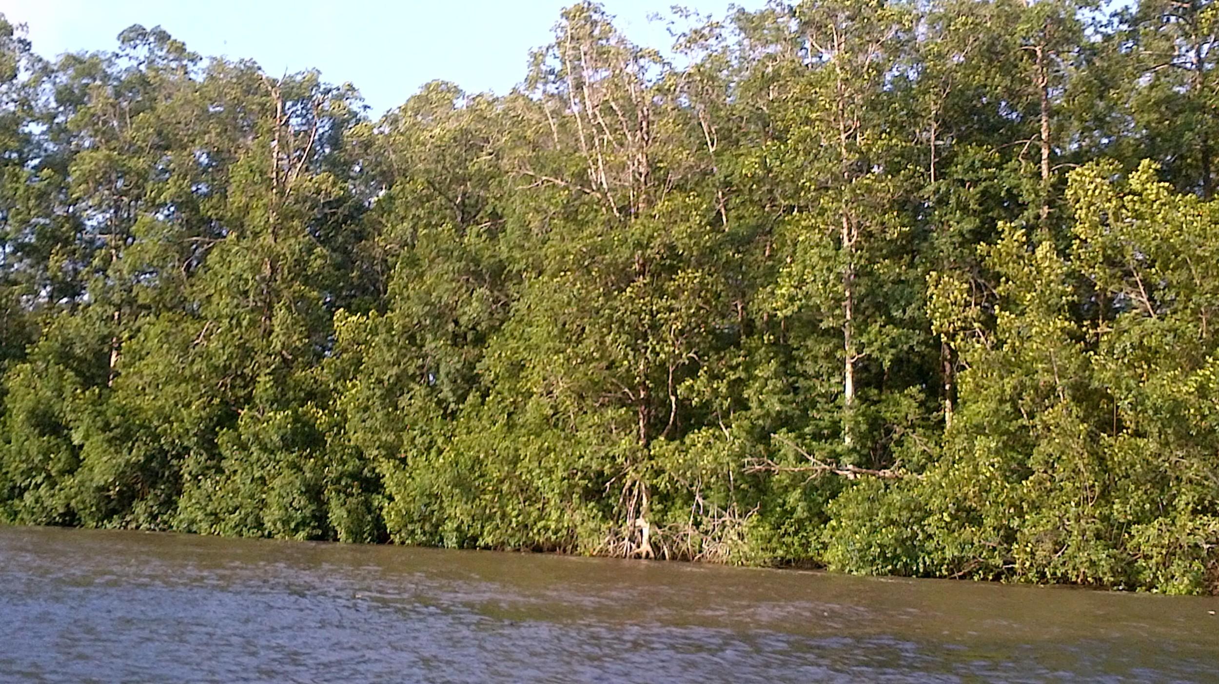 La mangrove préservée de l'île de Manoka. © Madeleine Ngeunga