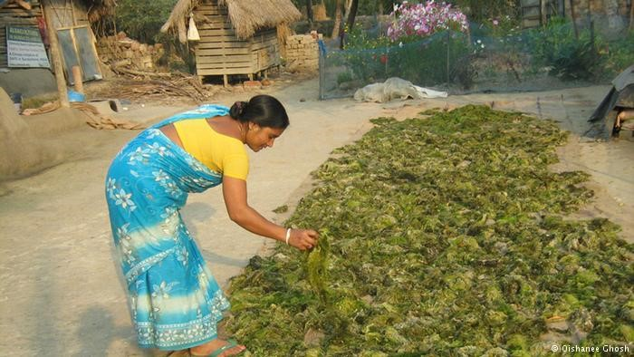 The project helps the women of the Sundarbans to secure their livelihoods.