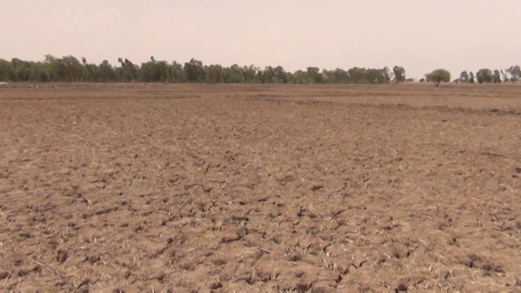 L'agriculture est durement touchée par la sécheresse @ Augustin Fodou
