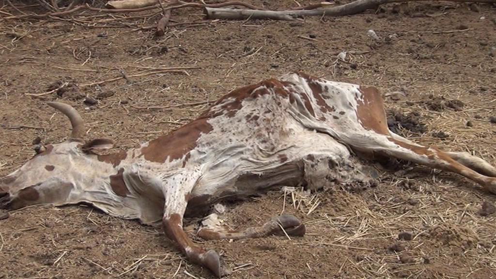 Un éleveur a perdu 90 % de son bétail © Augustin Fodou
