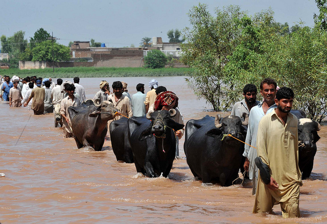 Displaced people fleeing Sindh streamed into Balochistan. © Abdul Majeed Goraya / IRIN