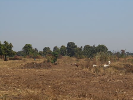 Goats grazing on the abandoned land which is no longer productive. © Watson Maingo