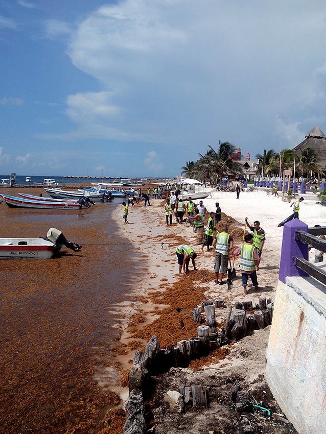The massive arrival of sargassum caused heavy economic losses and serious consequences for employment. © Guillermo Fuentes