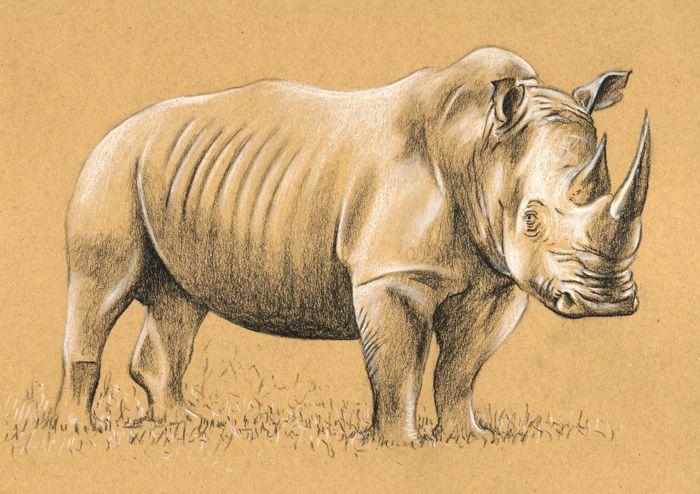 draw_a_rhino_3.jpg
