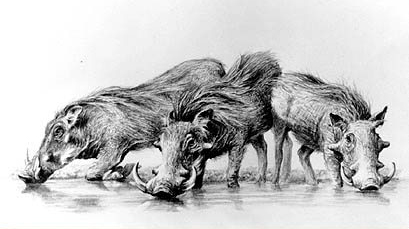 pencil_warthogs.jpg