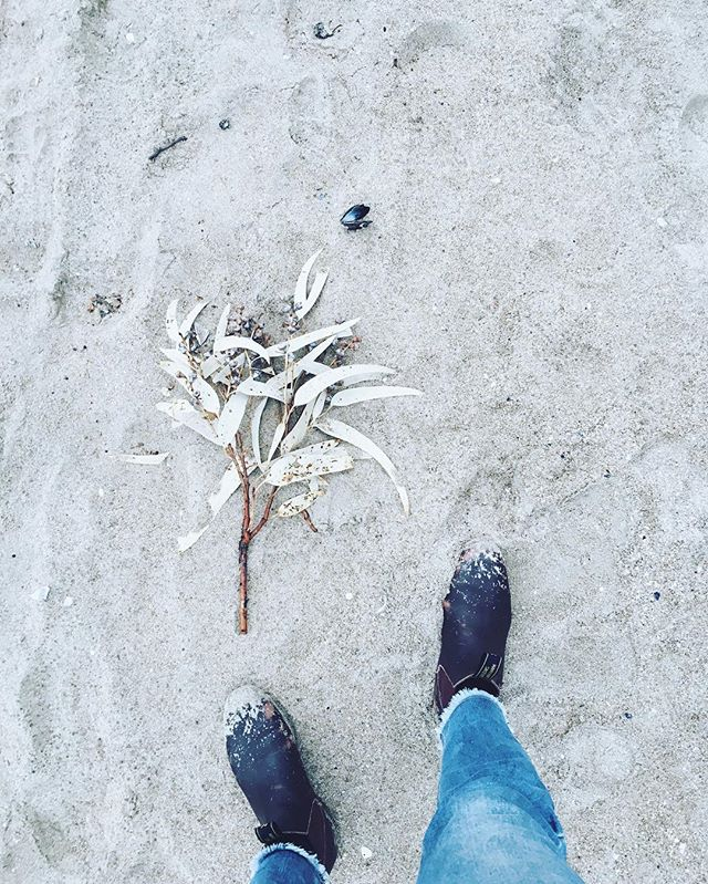 Blue jeans, grey gumnuts, ombré heart of a mussel shell, the beach knows how to pick an outfit! 🐚☄ . #beach #flatlay #walk #stylist #beachbabin' #beachstyle #blue