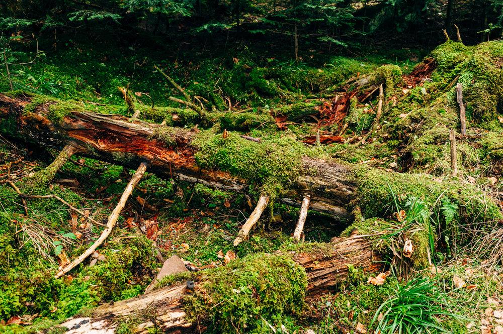 Schwarzwald, Trees