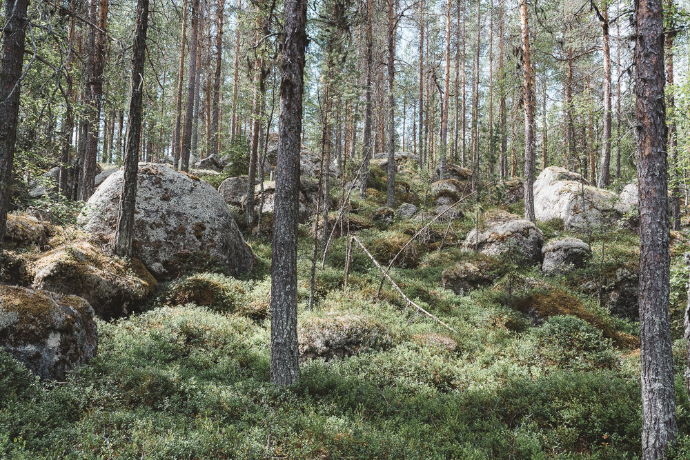 Trees, Sweden