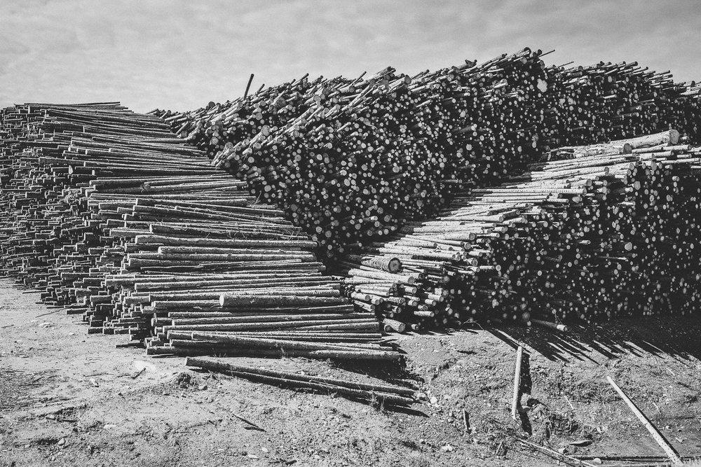 Fallen Trees, Sweden