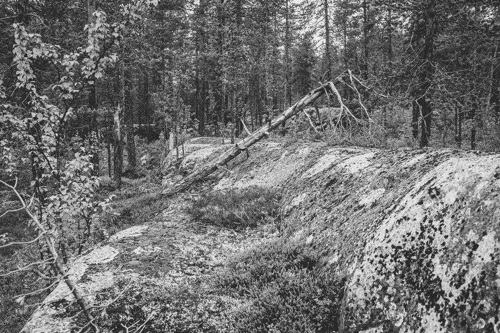 Tree, Sweden