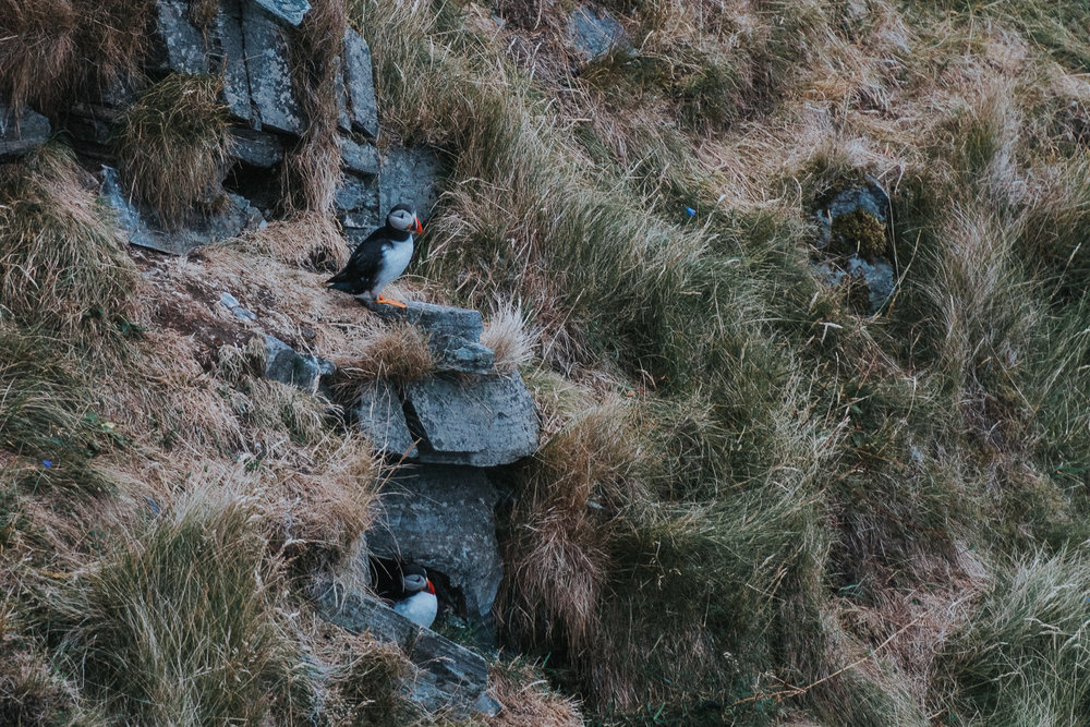 Bunch of Puffins, Runde
