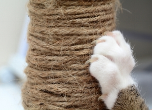 cat-paw-scratching-post_327029093_0.jpg