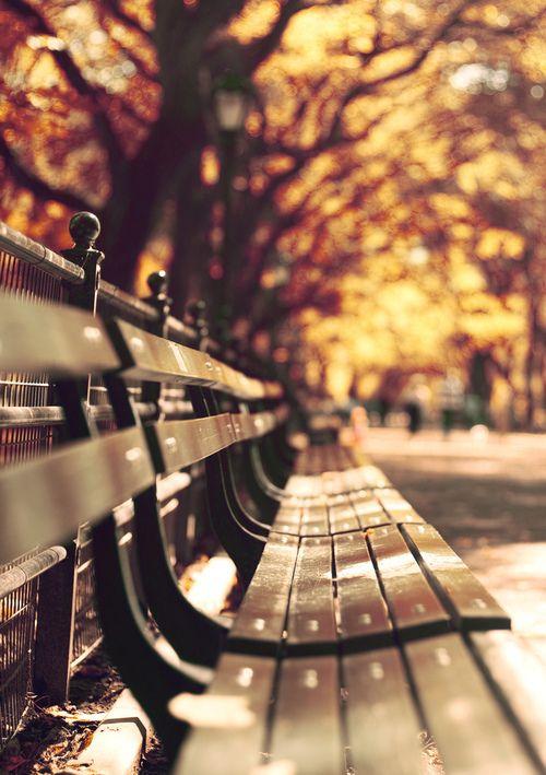 f06e443a04b37cf444cc1878589fd768--park-benches-central-park.jpg