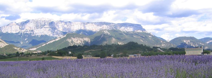 Beautiful lavender fields in Europe used in Veriditas oils.