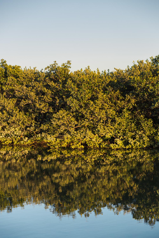 Wild_021316_Honeymoon_Island-17.jpg