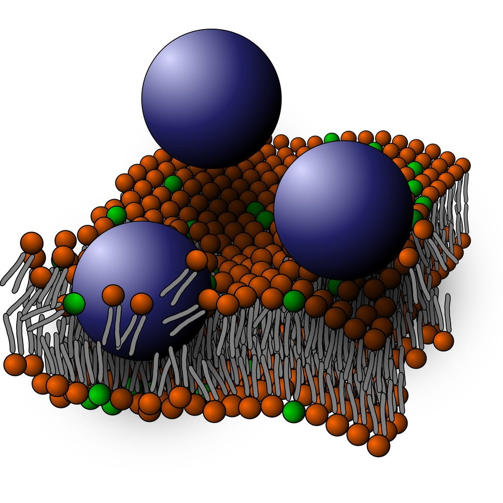 Nanoparticles disrupting a supported lipid bilayer