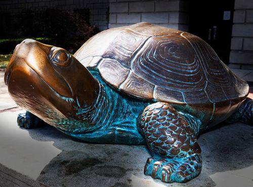 turtle(1).jpg
