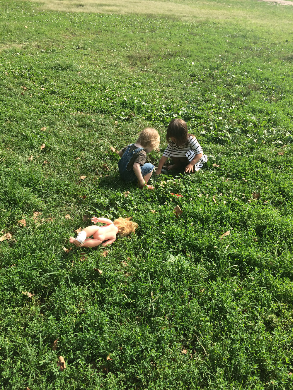 babygrass.jpg