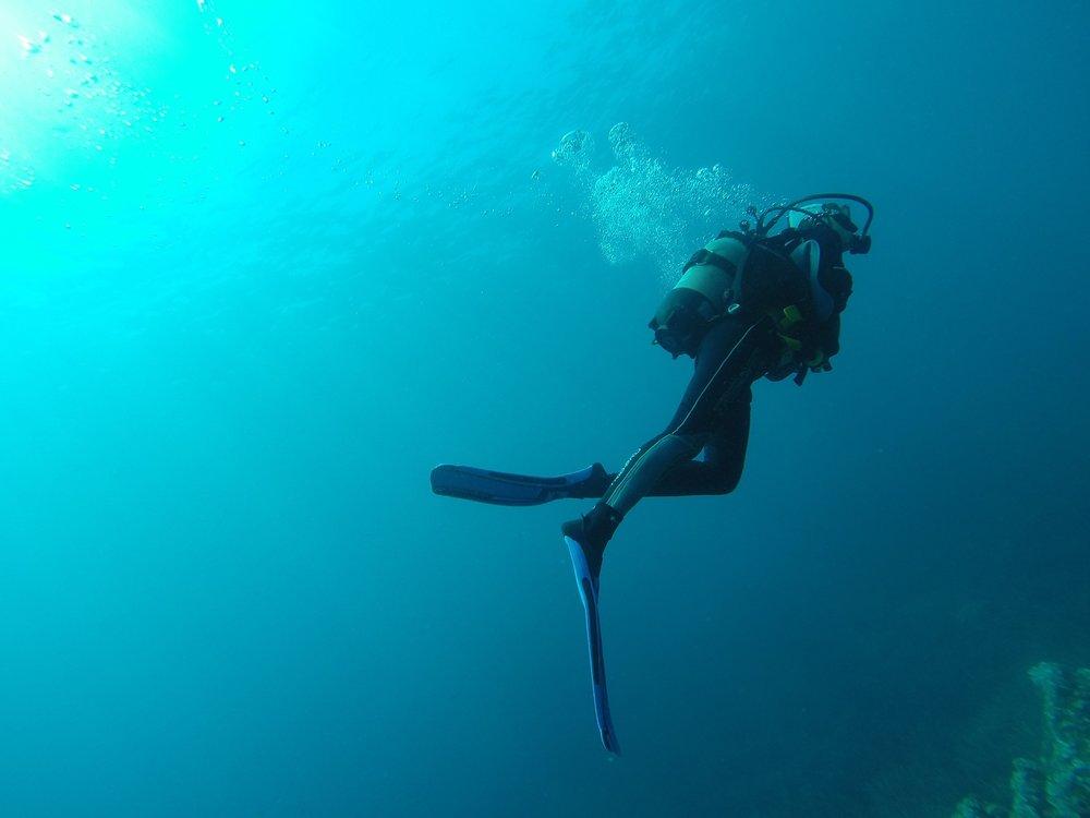 diving-1652869_1920.jpg