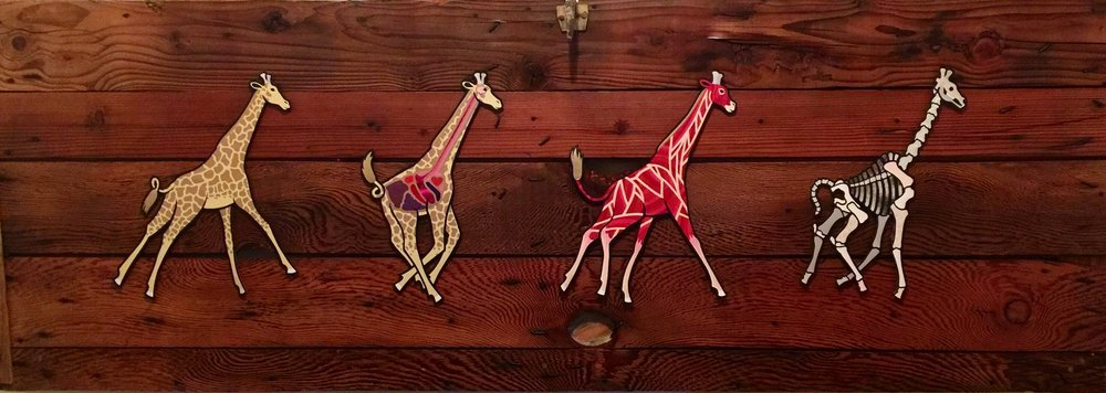 Giraffes -John Lucatorta