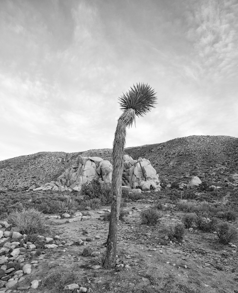 """Cactus Against the Sky  2017 archival giclee print on watercolor paper 10"""" x 15"""""""