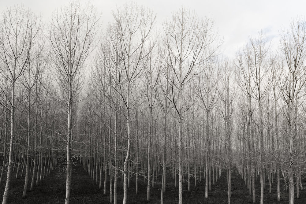 Trees in Rows