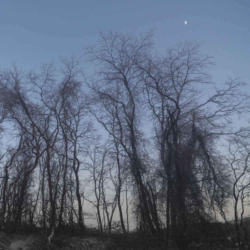 Trees and Moonlit Sky